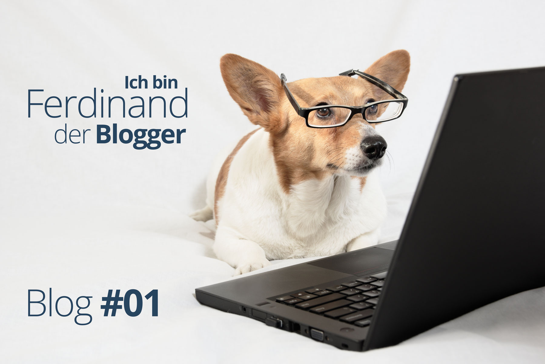 Ferdinand der Blogger – Ein Hund packt aus #01