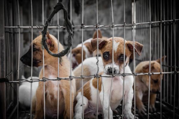 <strong>Irenes Blog – </strong>Hunde aus dem Tierschutz – Welche Probleme gibt es