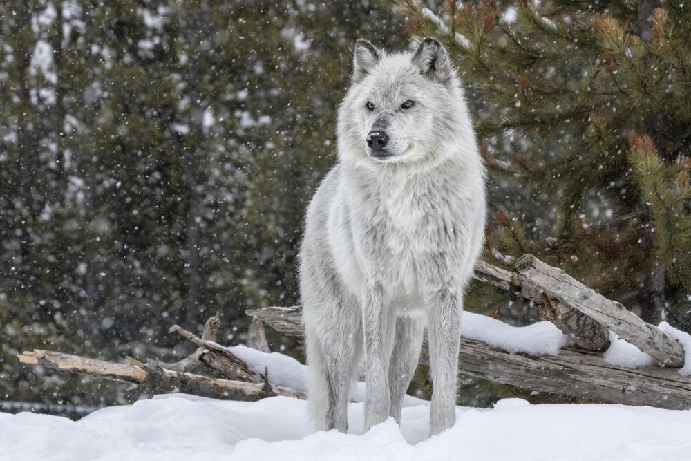 Die häufigsten Mythen und Märchen in der Hundeerziehung