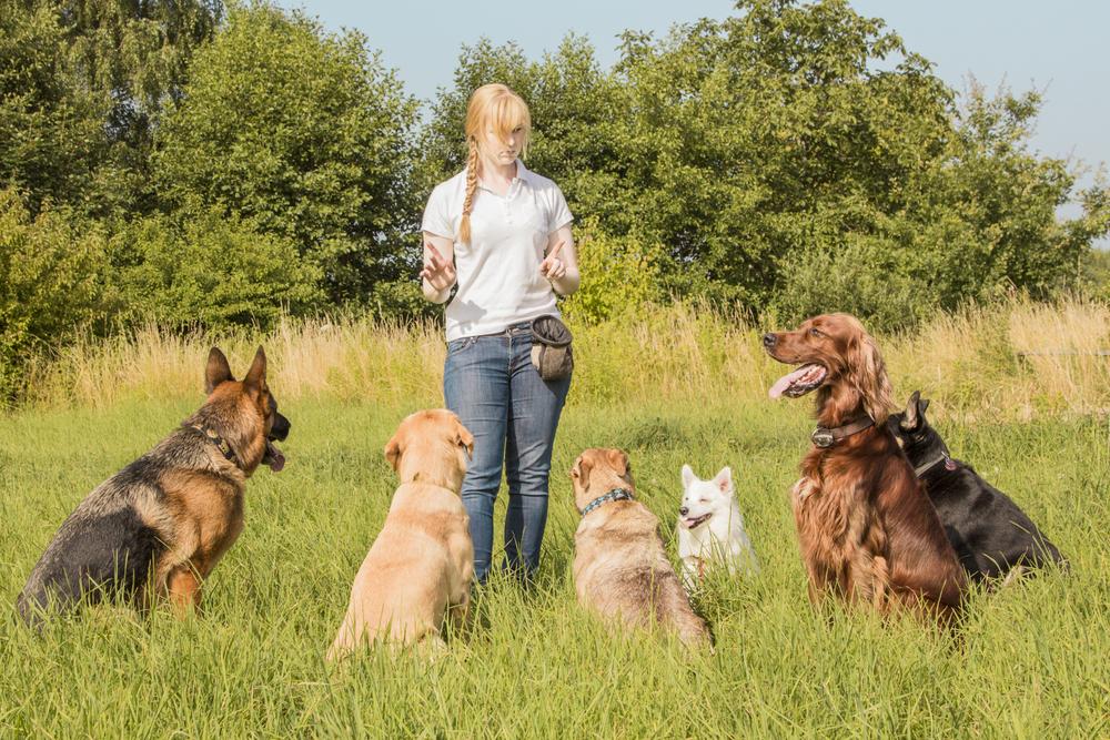 Woran erkenne ich einen guten Hundetrainer / eine gute Hundetrainerin?