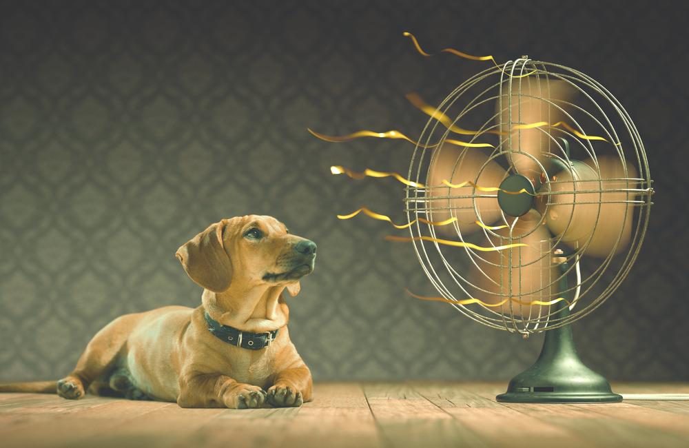 Coole Tipps für heiße Tage mit dem Hund
