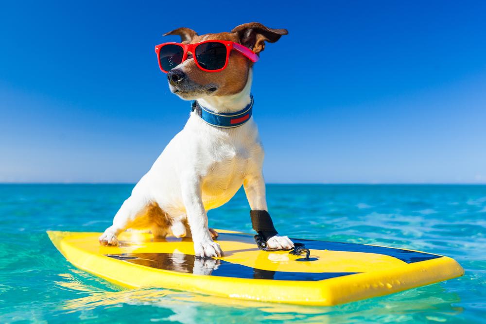 Urlaub mit dem Hund – was muss ich beachten?