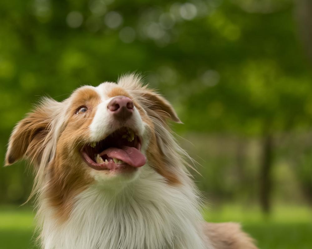 Das 10x FUTTER SPIEL für deinen Hund