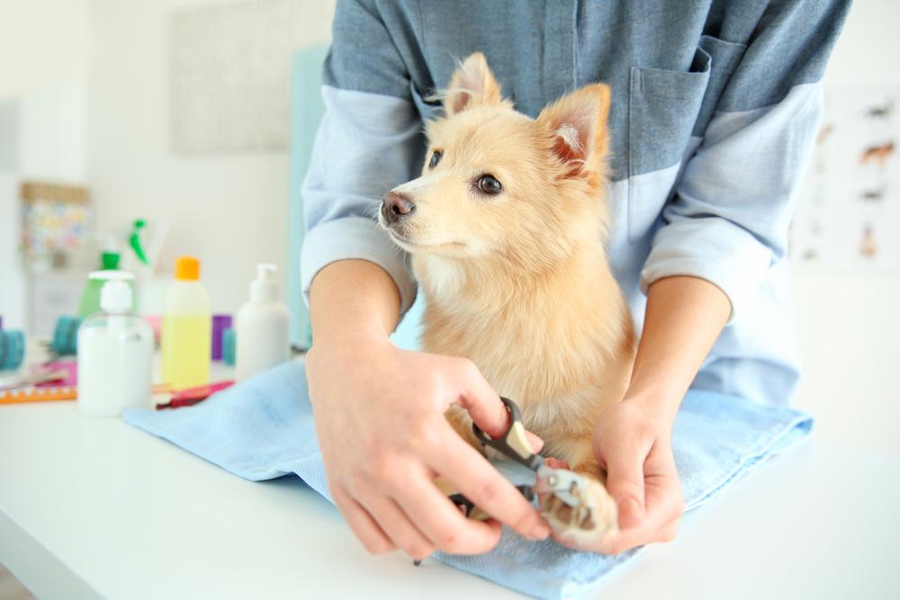 Hundefriseure – Hundefellpflege – Hundesalon