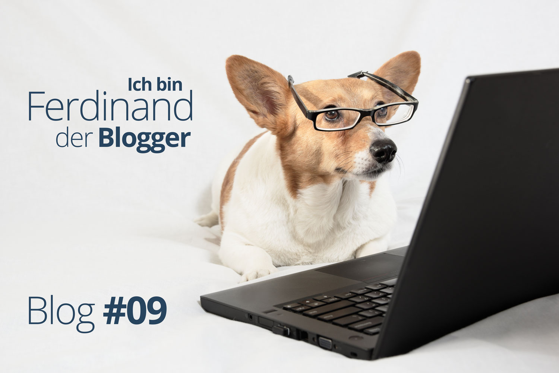 Ferdinand der Blogger – Ein Hund packt aus #09 – Wo ist der Ball