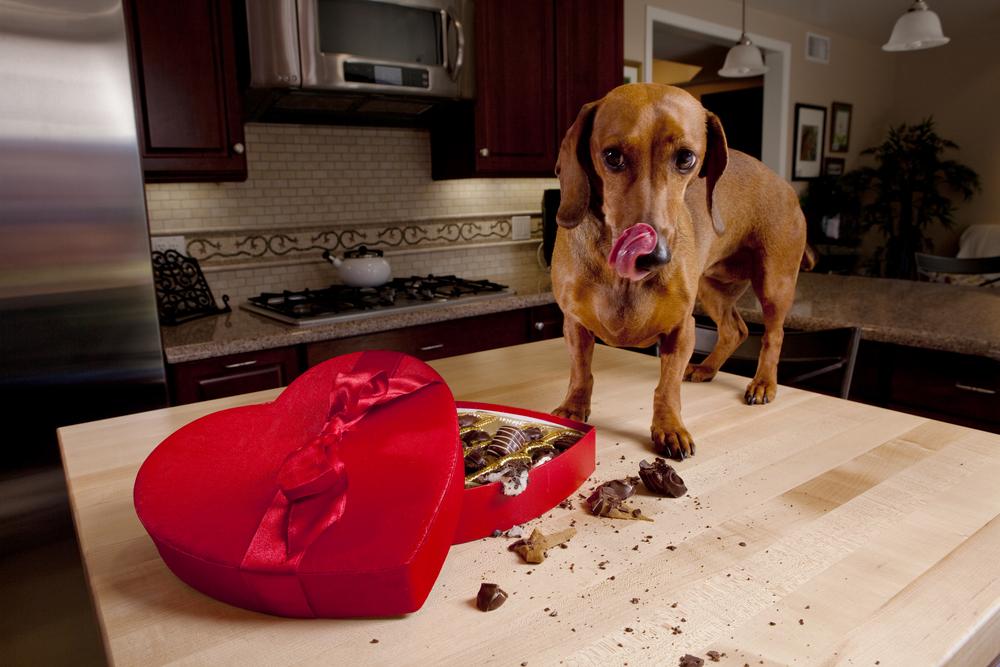 Gefahren für meinen Hund?