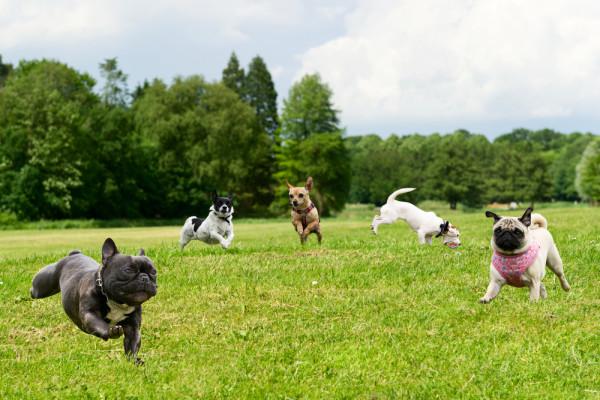 Hundefreilaufzone – Fluch oder Segen?