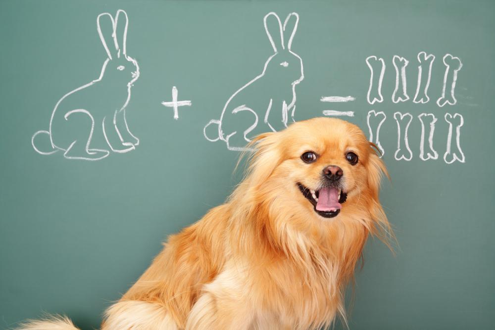 Das 1×1 der Hundeerziehung