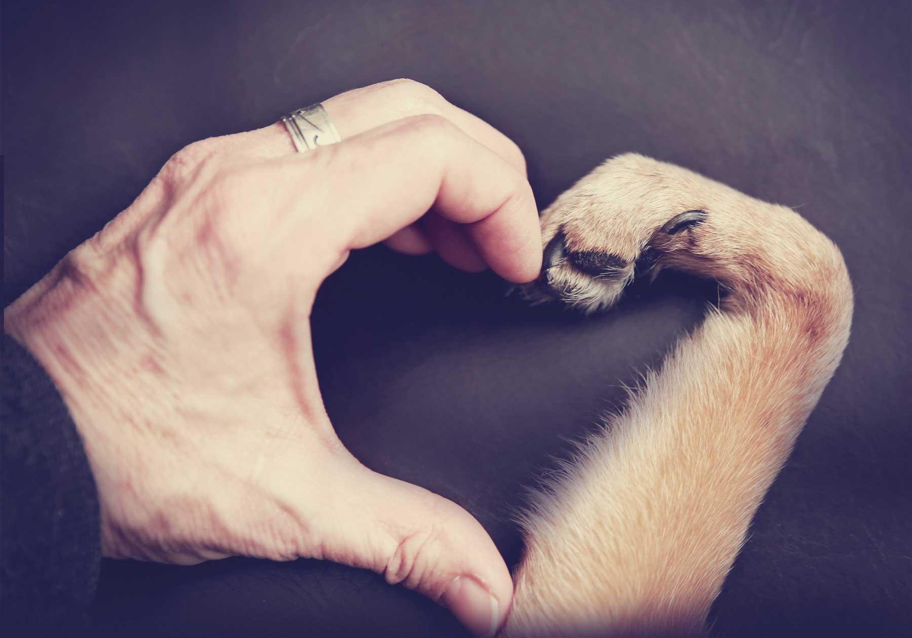 <strong> Online Einzeltraining </strong> vom ersten Tag an <br> Auch für junge oder erwachsene Hunde