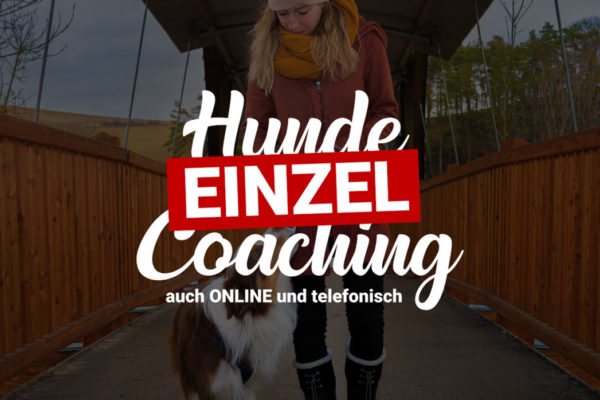 Einzel Coaching 🐶 Training für deinen Hund