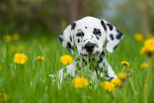 Kurs in der Hundeschule Hürm